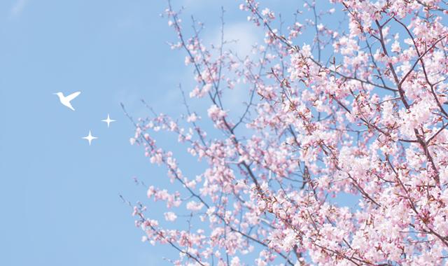 東京メトロがおすすめする東京お花見ガイド2018